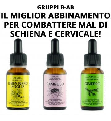 Ribes foglia + Sambuco + Ginepro