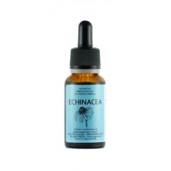 Echinacea - Tintura madre